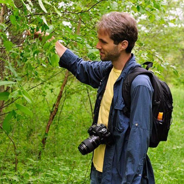 Sam Jaffe explores local species of caterpillars
