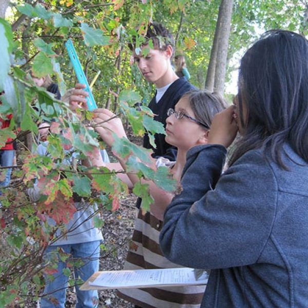 Students from the Concord-Carlisle High School Environmental Field Studies Group have been tracking the seasonal changes of about twenty trees annually.