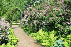 Concord Garden on 2019 Concord Museum Garden Tour
